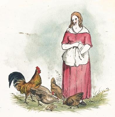 chickens-27