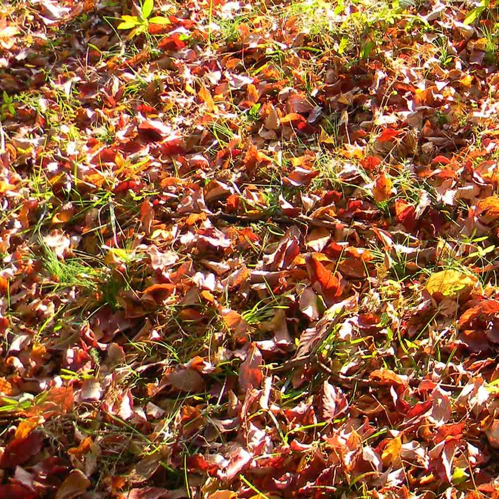 florida gardening in november