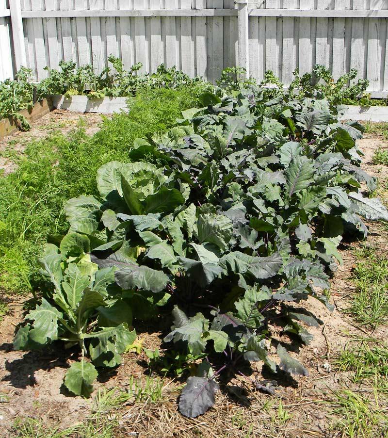 biointensive gardening bed