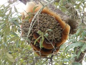 Bees3web
