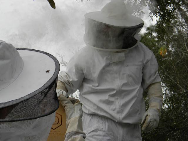 Bees5web