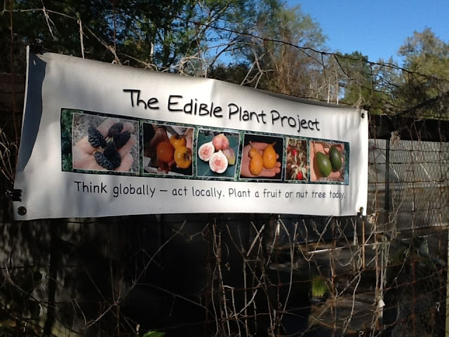 edible plant project