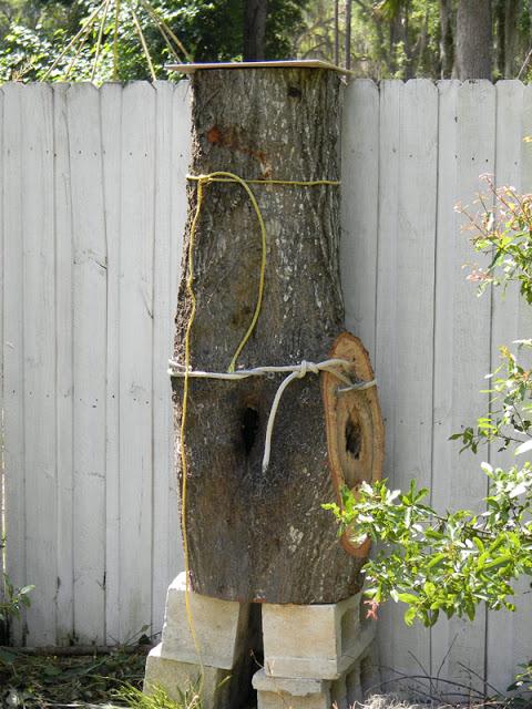bee log
