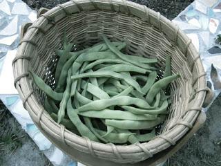 GreenBeans-Gardenclassic