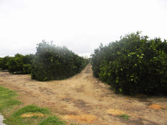 problems with monoculture farming