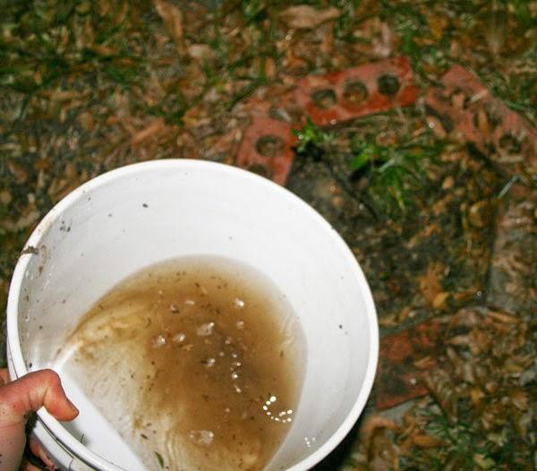 homemade fungi inculant