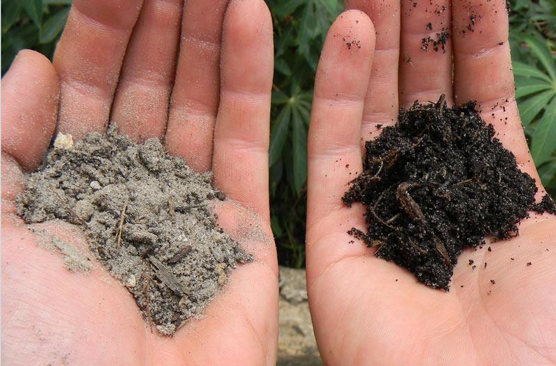 drunken composting