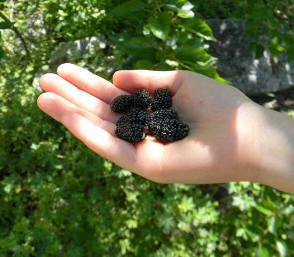 FirstMulberries