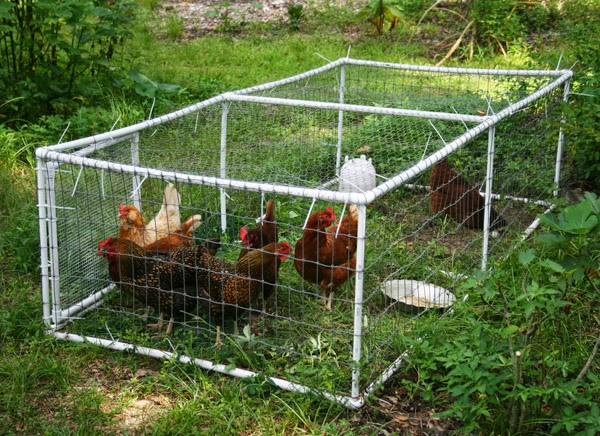chcicken tractors vs. chicken coops