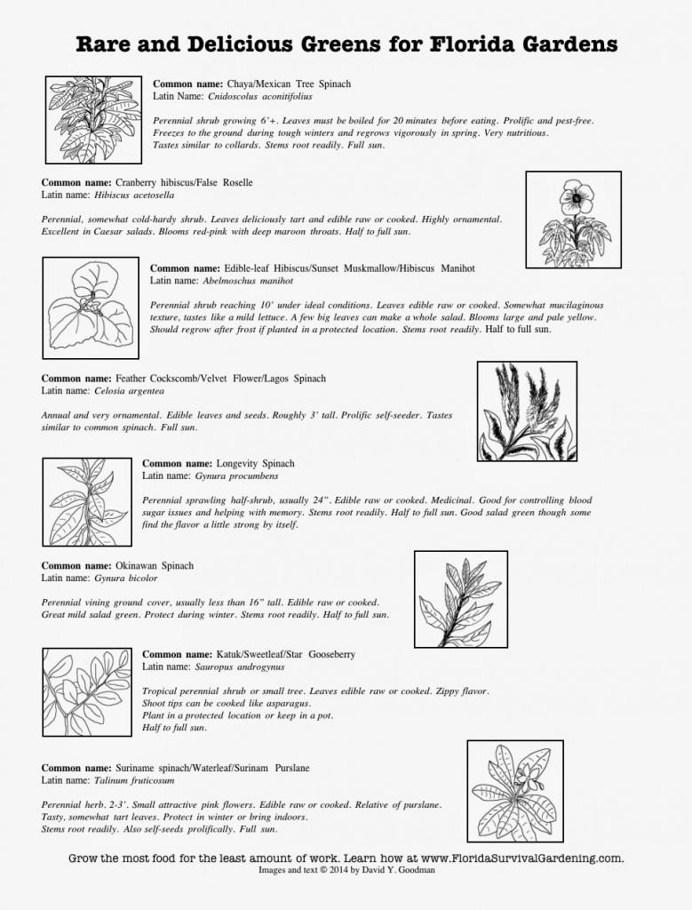 florida perennial vegetables