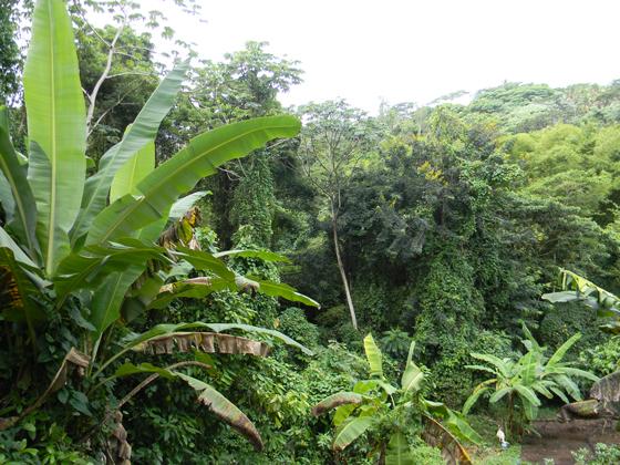 TropicalRainForestPilgrimsFarm