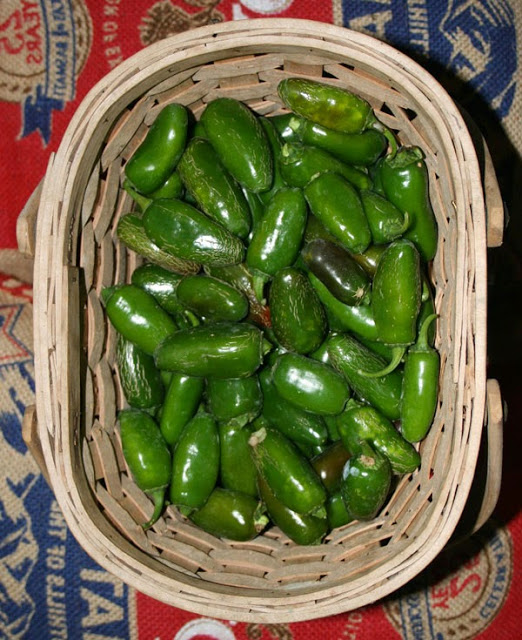 jalapenos waiting to go into our homegrown jalapeno pickle slices recipe!