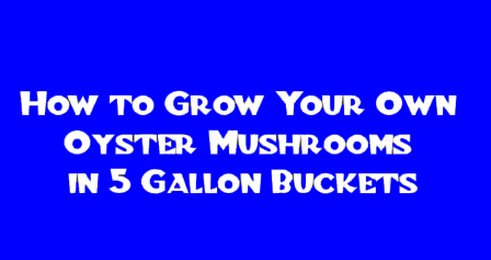 how-to-grow-srooms