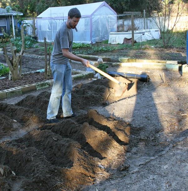 PlantingPotatoes2015-1