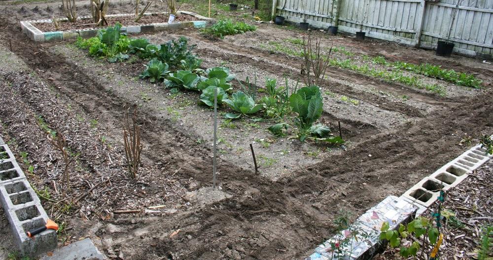 florida gardening beds