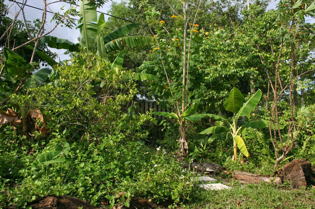 SouthFLFoodForest2015-2
