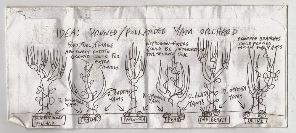 YamPollardDesign-1