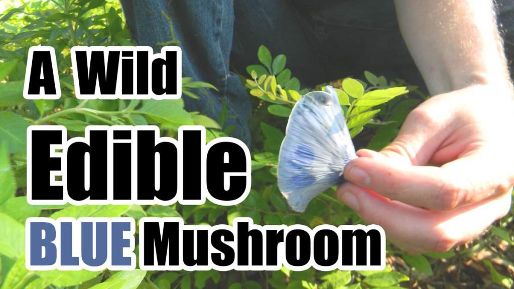 Edible_Blue_Mushroom