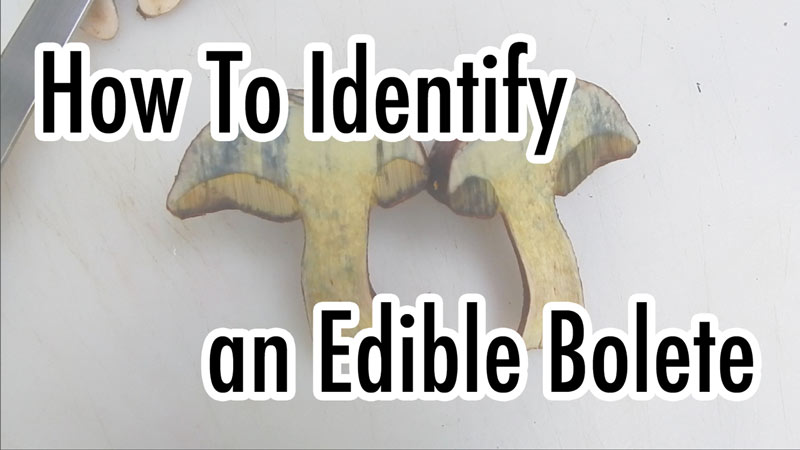 how to indentify an edible bolete
