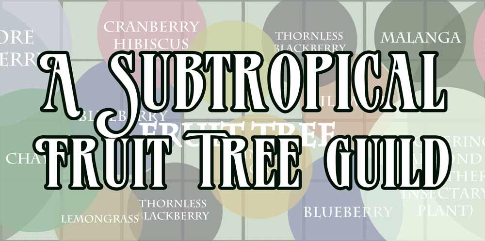 subtropical fruit tree guild
