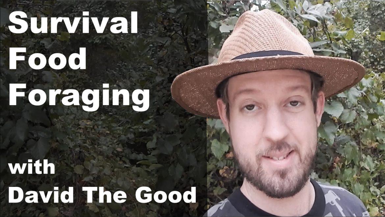 survival food foraging