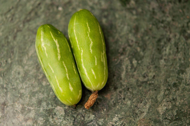 coccinea grandis the ivy gourd perennial cucumber
