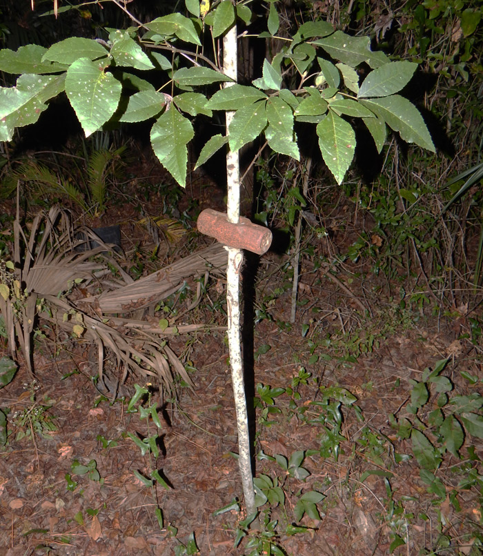 Sledgehammer_Tree
