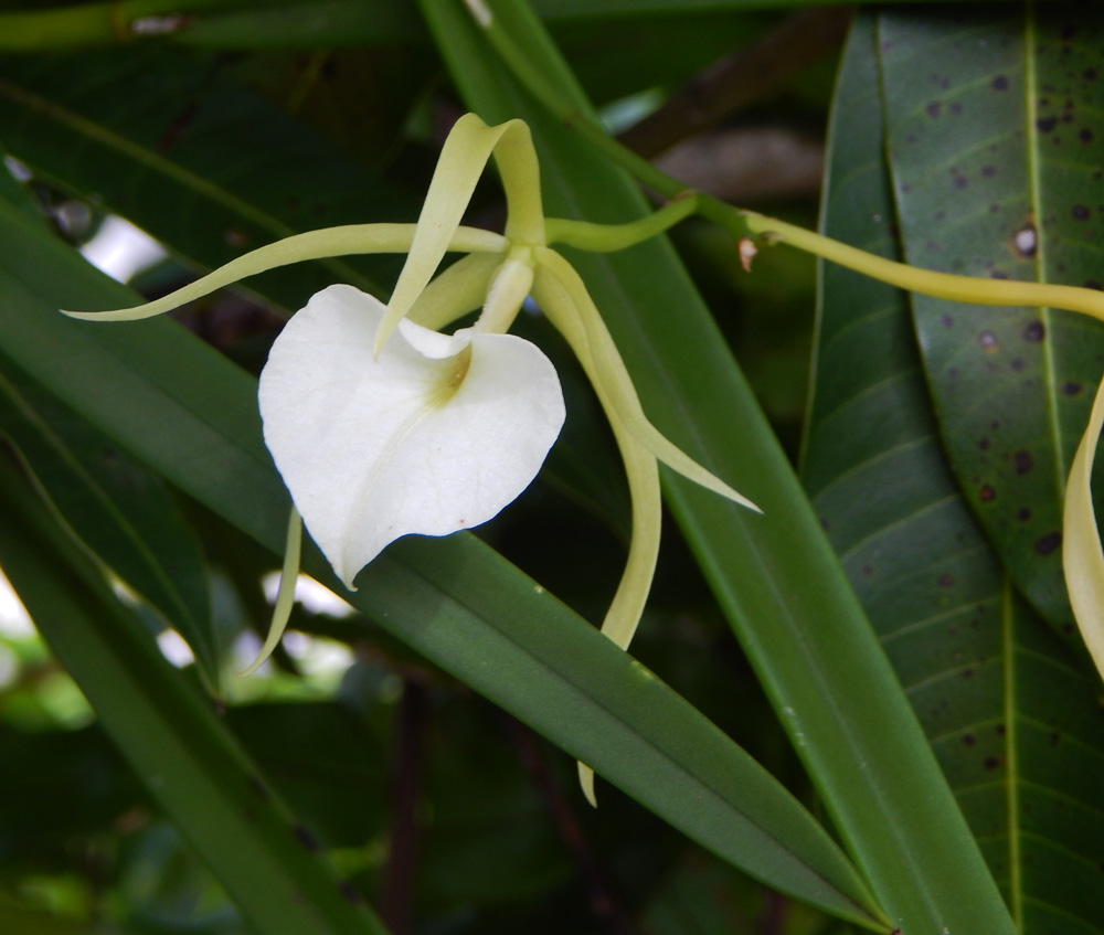 South_FL_Food_Forest_Orchid