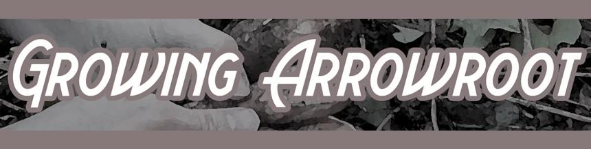 Growing Arrowroot title image