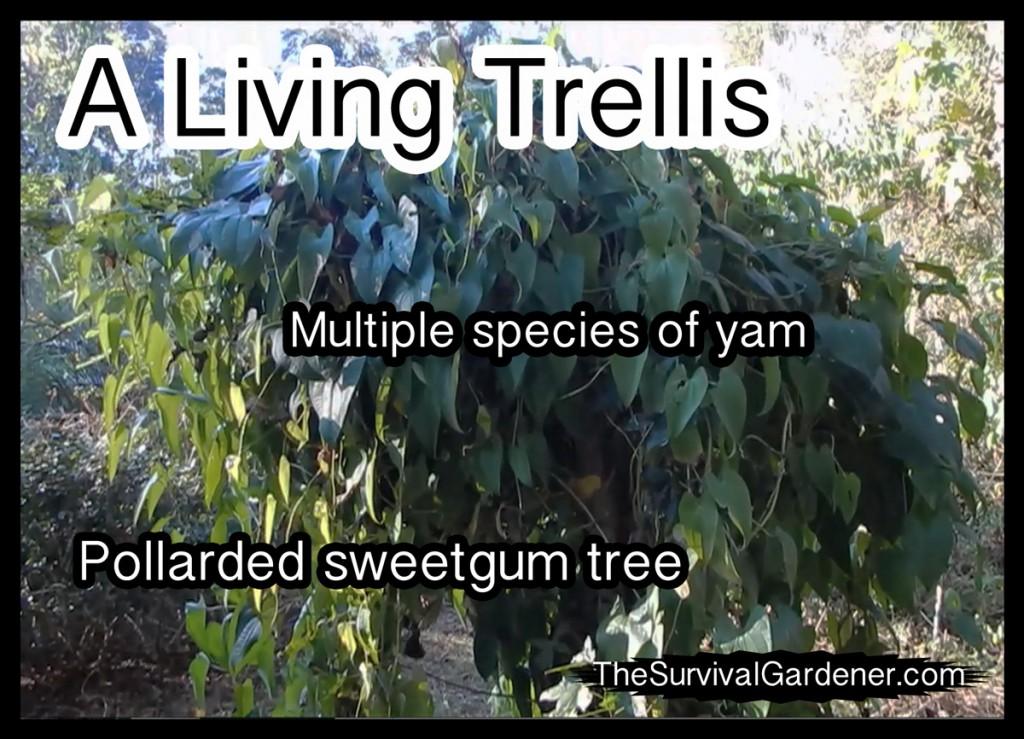 Living_Trellis
