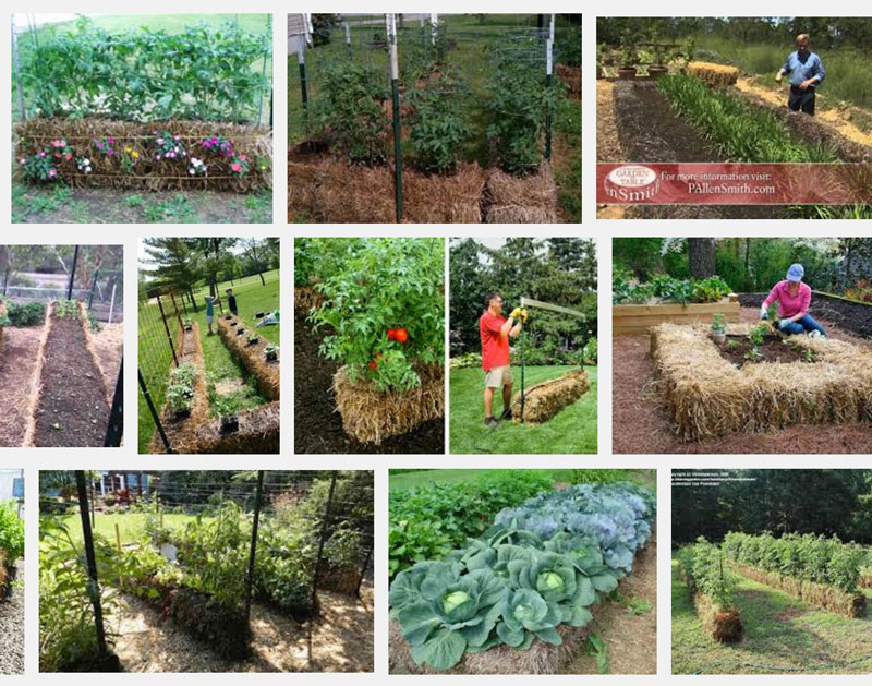 Attractive Straw Bale Gardening Images