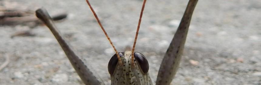 Cute_Little_Grasshopper