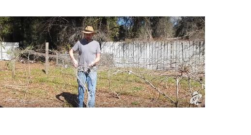 pruning_hi_res