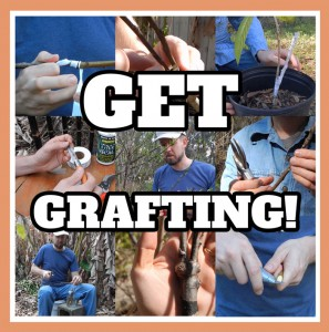 Get_Grafting_Preview