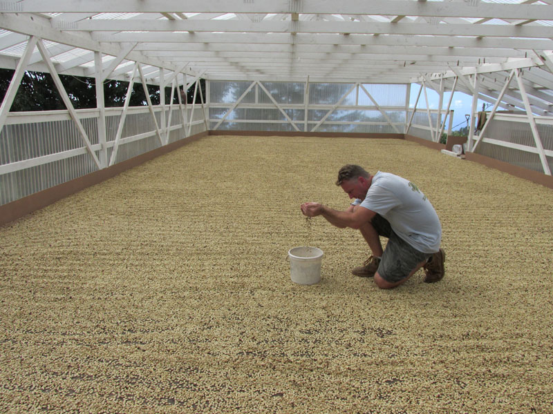 How_To_Grow_Coffee_Gary_Strawn_Parchment_stage
