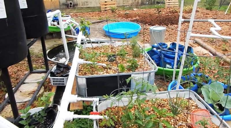 Backyard_Aquaponics_Grow_Bag_Gardens_2