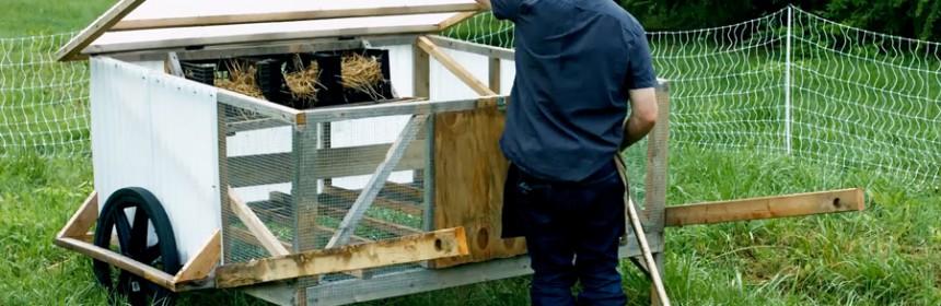 Chicken_Coop_Chicksaw_Justin_Rhodes