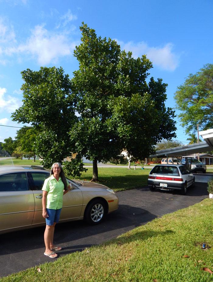 Jackfruit_Tree_South_Florida_With_Sarah