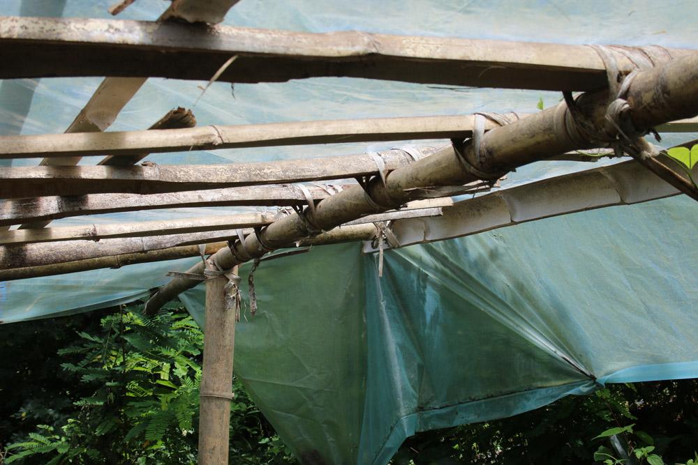Bamboo greenhouse 2