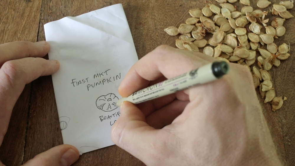 Saving Pumpkin Seeds Making Homemade Seed Packet