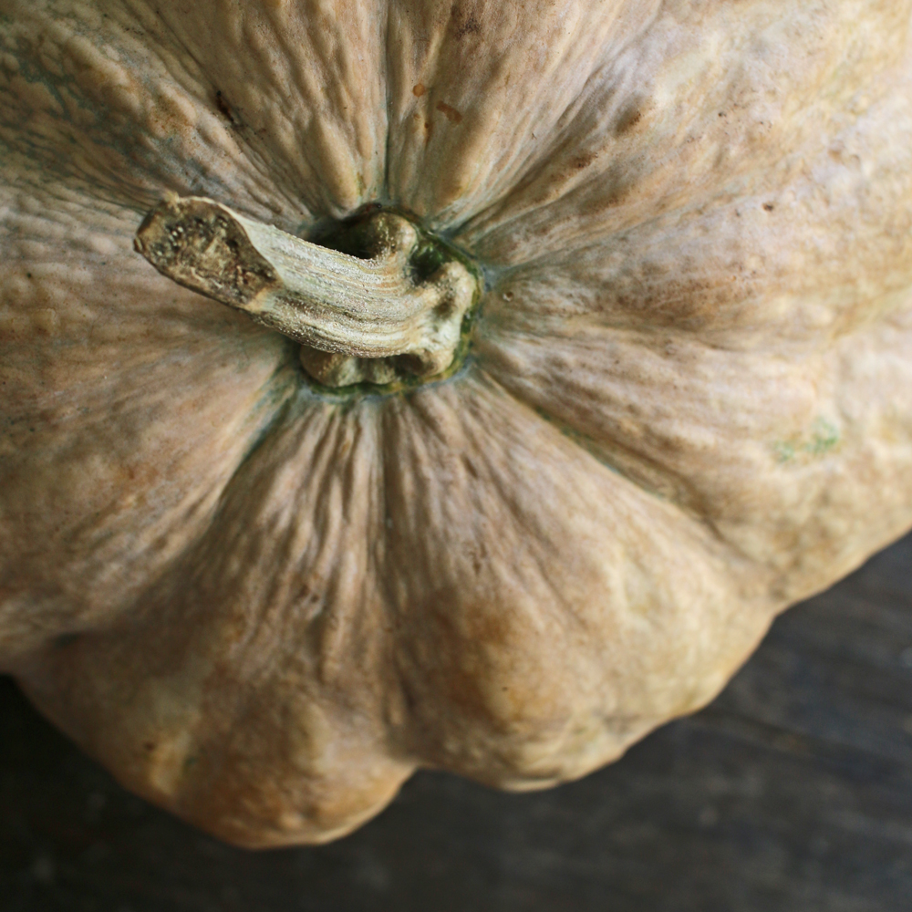 Pumpkin-closeup
