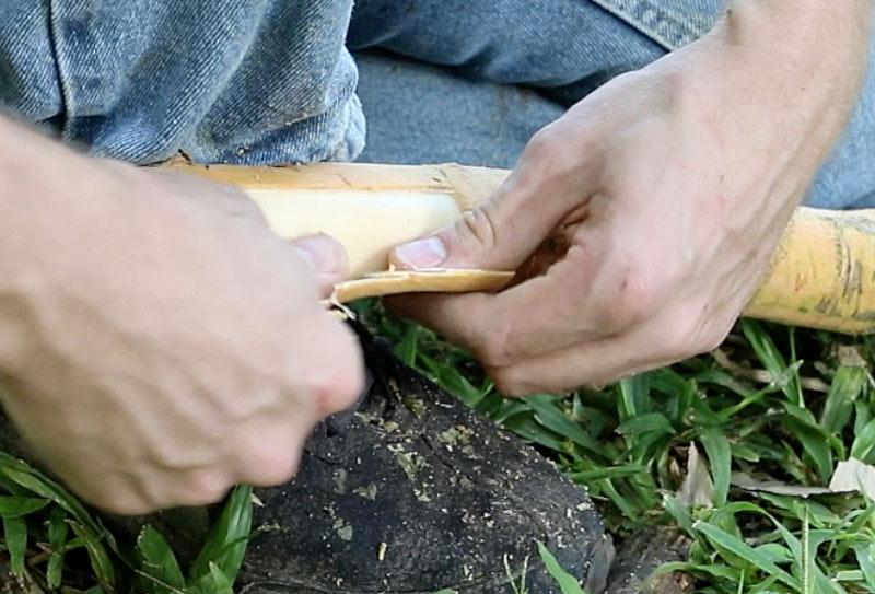 Peeling-cinnamon-bark