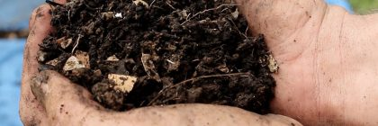 beautiful-sifted-compost