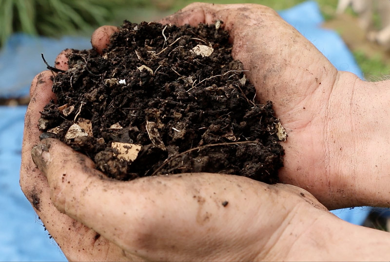composting destroy weed seeds