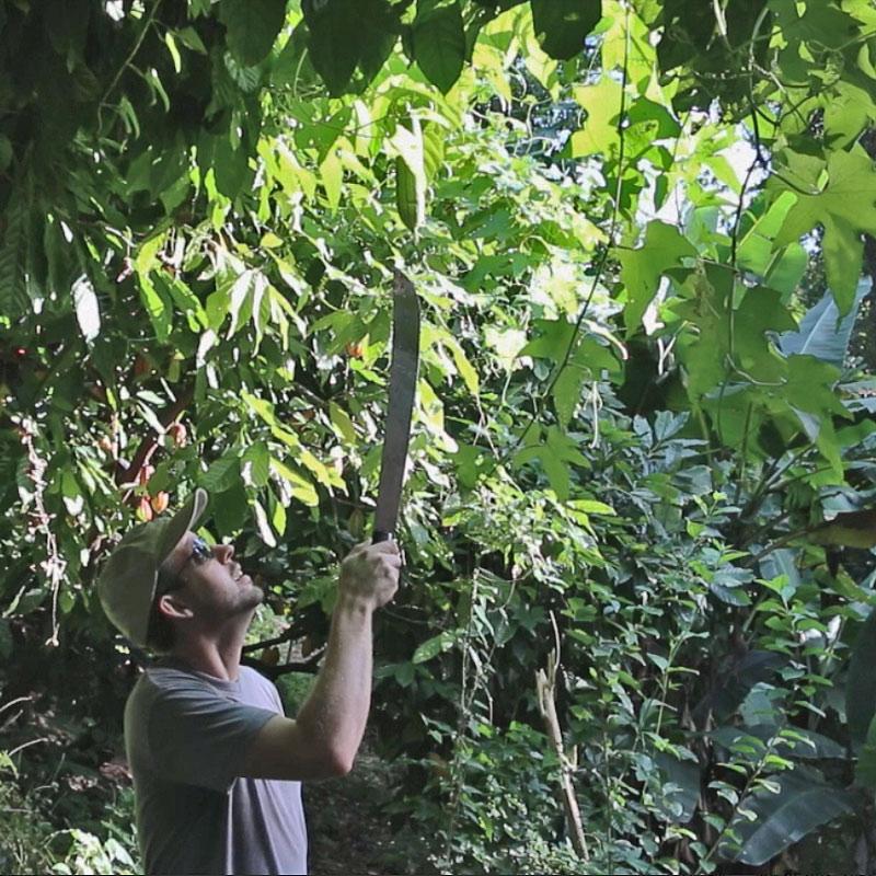 luffa poisoning cucurbiticin poisoning poisonous zuchinni