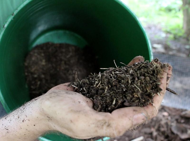 Back To Eden Chicken Compost Handful