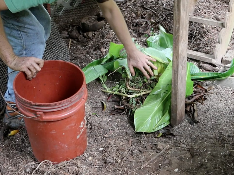 Back To Eden Chicken Run Compost