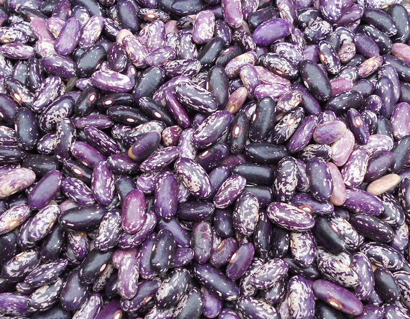 kebarika-dry-bean-Southern-Exposure