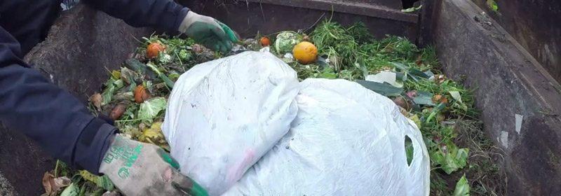 no-rules-compost-2