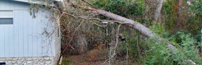 Dangerous-tree-falling-on-house